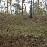 Hügel sw. Deetz gemäht und abgeräumt - Foto: W. Ewert