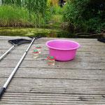 Der Teich lud zum Forschen ein