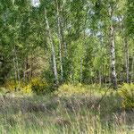Vorwaldstadium 1 - Foto: Wolfgang Ewert