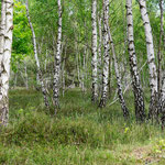 Vorwaldstadium 2 - Foto: Wolfgang Ewert