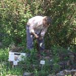 Chr. Schröder bepflanzt die Kräuterschnecke