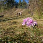 Blütenträume im Herbst - Foto: W. Ewert