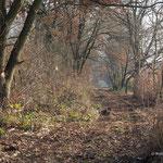 """Vom """"Dschungel"""" zur Allee - Foto: W. Ewert"""