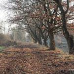 """Vom """"Dschungel"""" zur offenen Kulturlandschaft - Foto: W. Ewert"""