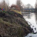 Kahlschlag am Ufer Höhe Ökolaube - Foto W. Ewert