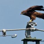 Ein Seeadler beobachtet uns - und wir ihn