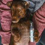 Roter Rudi vom Rehsprung Standard Kurzhaarteckel - Dachshund with Always your friend Infinity Perfume