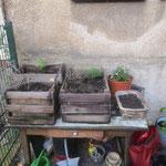 ...urban gardening zu deutsch HINTERHOFBLUMEN, Reclam 51, Stoppt Entmietung, Leipziger Osten, Sachsen