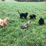 Heute durften wir nach dem Training mit den Kundenhunde spielen