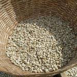 乾燥し終わった生豆。