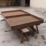ドライテーブル(棚)で生豆を天日乾燥している。