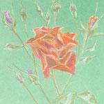 """""""Роза Ред"""". Размер: 30x40 см Материал: Тонированная бумага, пастель Оформление: Нет/по желанию Продается Цена: 5000 руб."""