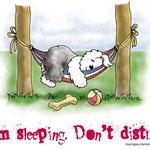 disegno di un bobtail che dorme su un'amaca