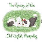 disegno di 2 cani bobtail che giocano in un prato fiorito, è primavera!