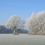 Winterstimmung auf dem Acker