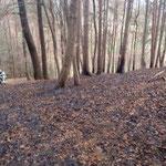 Ausgebrannter Waldboden.
