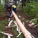 Der Baum wird im Wald entrindet....