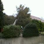 ...und Bäume auf Wohnhäusern galt es abzuarbeiten.