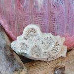 Schwemmholz Dekoration Ziervase mit Muscheln und rosa Leinenband