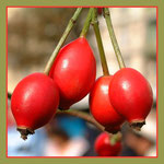 Das Leben ist ... Früchte ernten