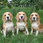 Три девицы под... яблоней: Боня, Элла и Соня