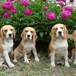 Дарий, Соня, Элла и Бонита