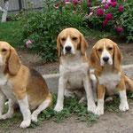 Бонита, Дарий и Соня