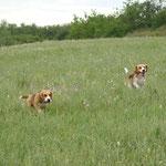 Соня и Дарий