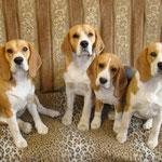 Вся компания в сборе: Бонита, Дарий, Соня и Элла