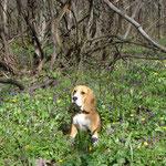Соня в весеннем лесу