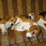 Удобная подушка. Бонита, Дарий и Элла