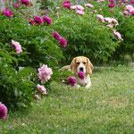 Элла в саду