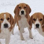 Три мушкетера: Элла, Бонита и Дарий