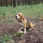 """Соня: """"Я нашла грибочек!"""""""