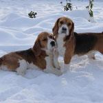 Дарий и Бонита. Зимние прогулки