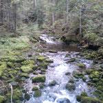 Schwarzwasserbach