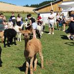 Besuch der Alpaka-Mädels
