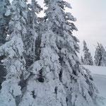 wunderschöne Winterlandschaft und sehr viel Schnee