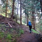 Der Wald lichtet sich und man gelangt auf Almflächen.