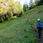 Über die Almwiese folgen wir dem Pfad weiterhin bergauf.