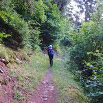 Der Weg führt durch den Wald immer in mäßiger Steigung.