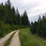 Wir gelangen auf eine Forststraße und folgen dieser bis zur Starkenburger Hütte.