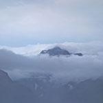 Der Nebel lässt einen kurzen Blick auf den Habicht zu.