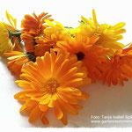 Nur schöne und gesunde Blüten auswählen.