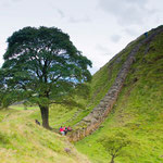 Sycamore Gap - featured in Robin Hood Film.