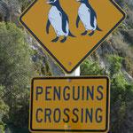 Dunedin, île du sud