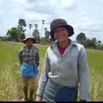 Dans les rizières, les femmes s'activent, le sourire aux lèvres.