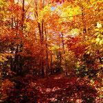 Québec, à l'automne