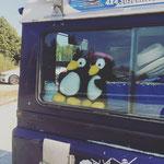Maria, die waren aufgeregt, kaum zu bremsen! The Penguins just could not wait to get rolling south