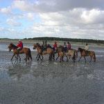 La baie de somme à cheval